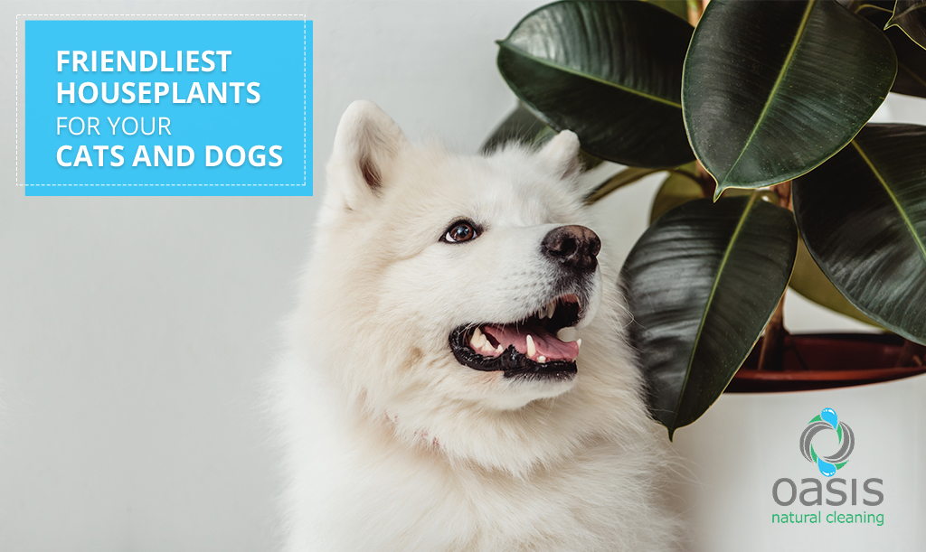 Friendliest Houseplants for Your Cats and Dogs